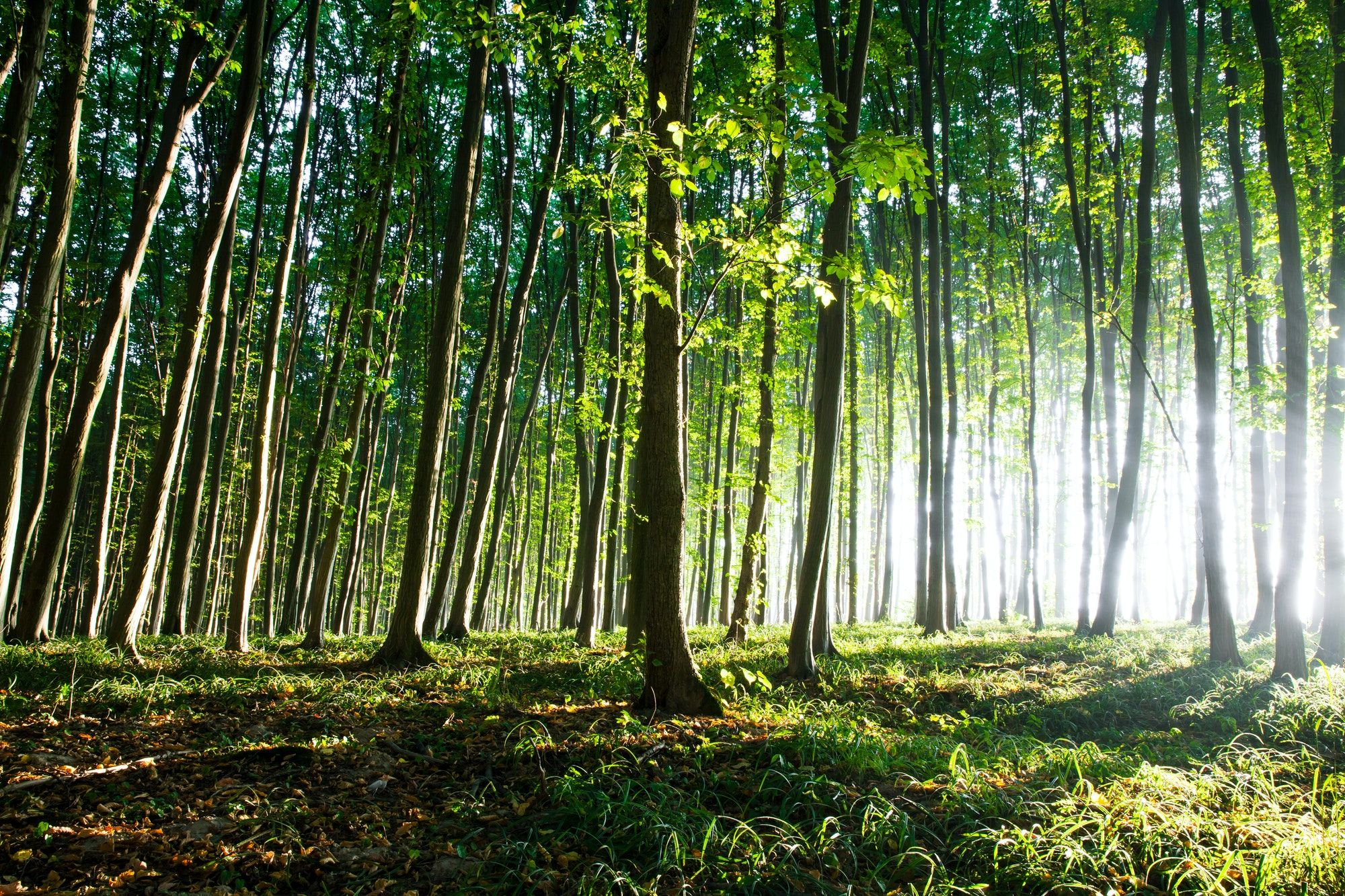 Limpia & Desinfecta de forma ecológica